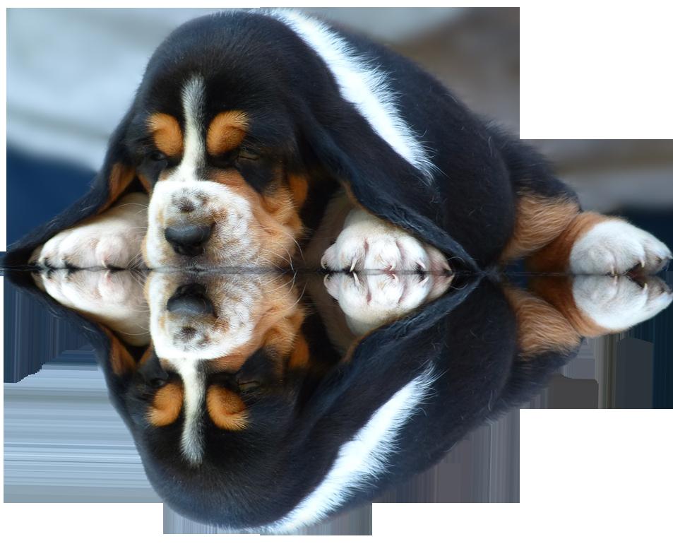 kuorii puppies cuccioli