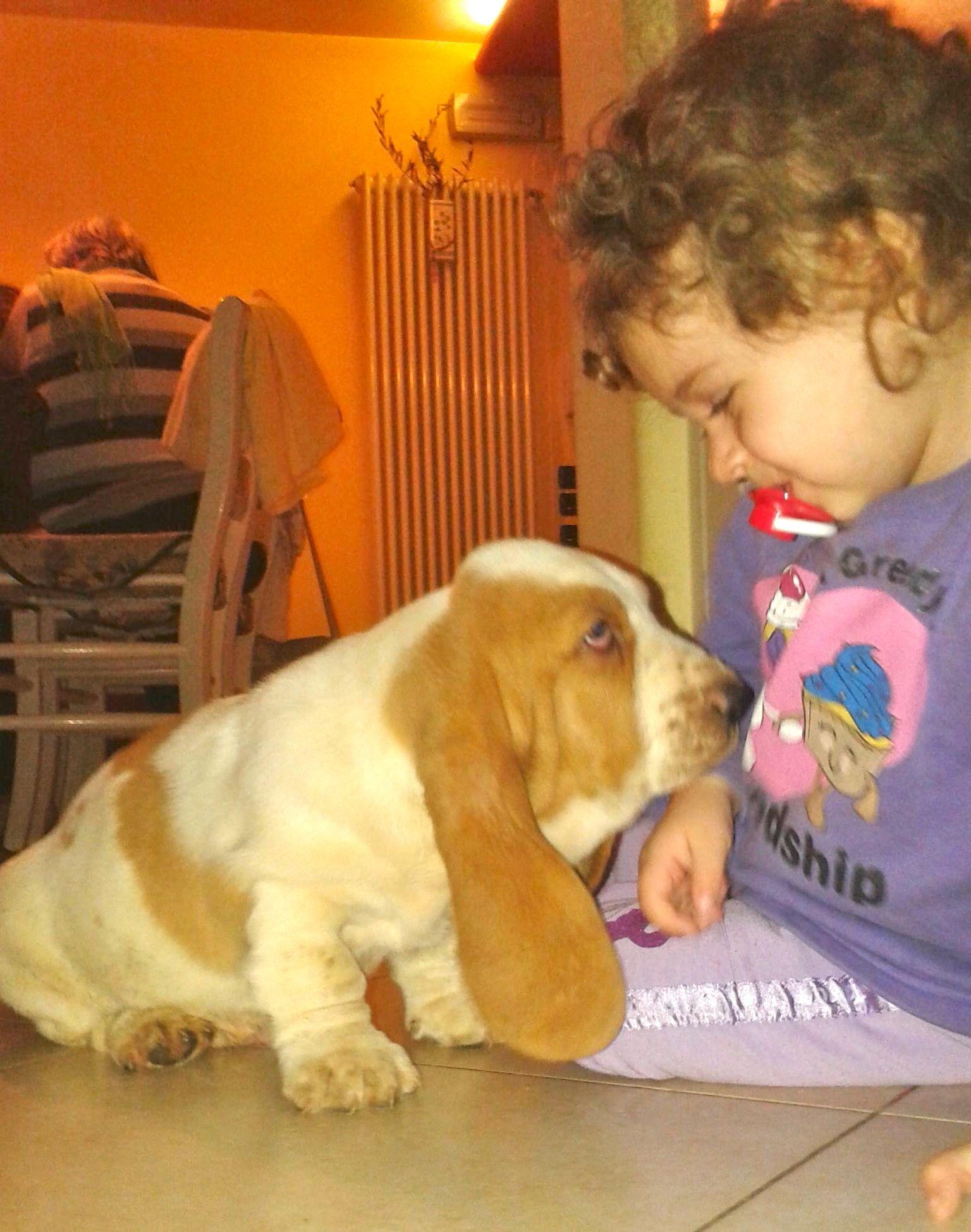 Basset Hound in casa - basset e bimba