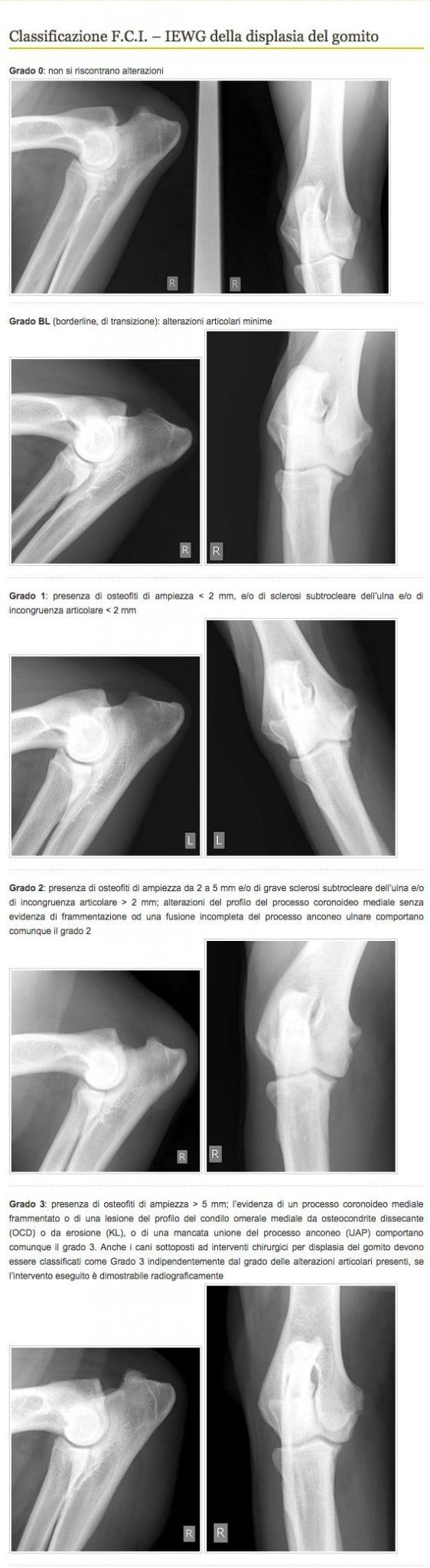 www.fsa-vet.it displasia gomito