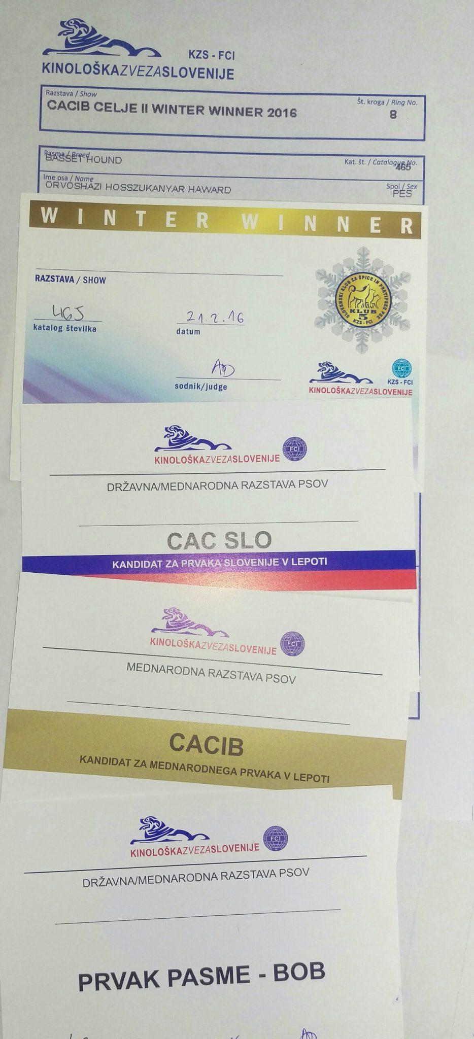 cacib winter winner celje titoli vinti