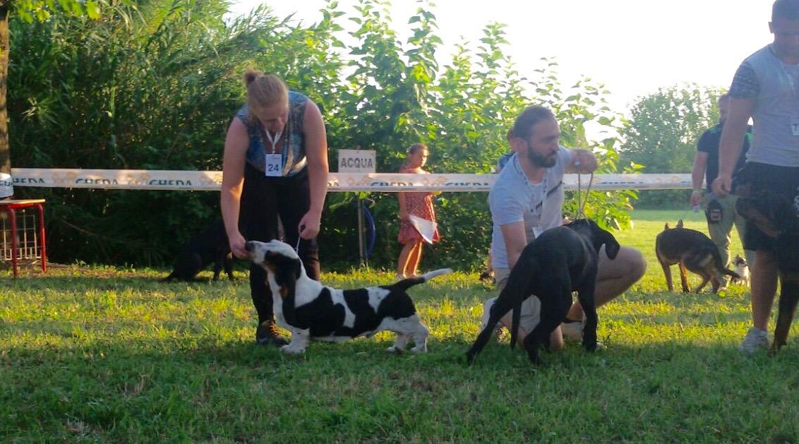 expo-canina-santangelo-niki in ring bis