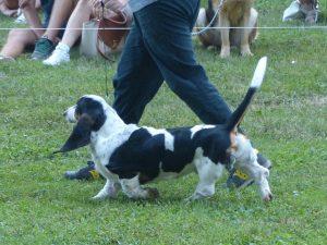 Expo canina Parco Costabissara (VI)-inmovimento