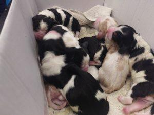 cuccioli appena nati