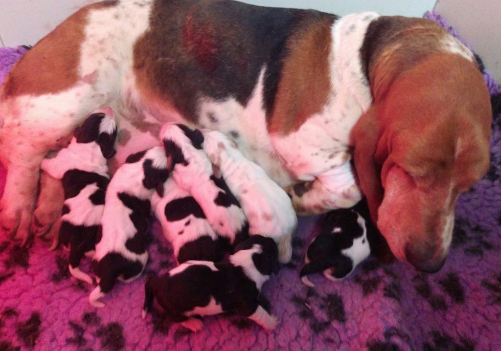 regina cuccioli kuorii