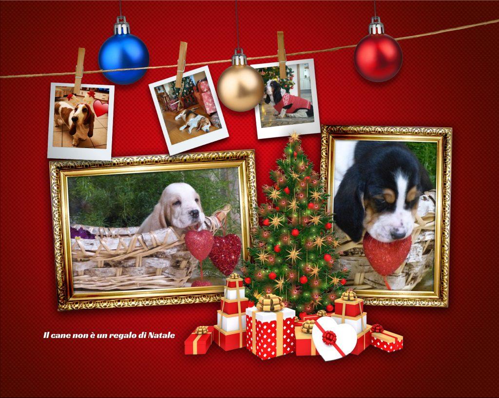 il cane non è un regalo di Natale